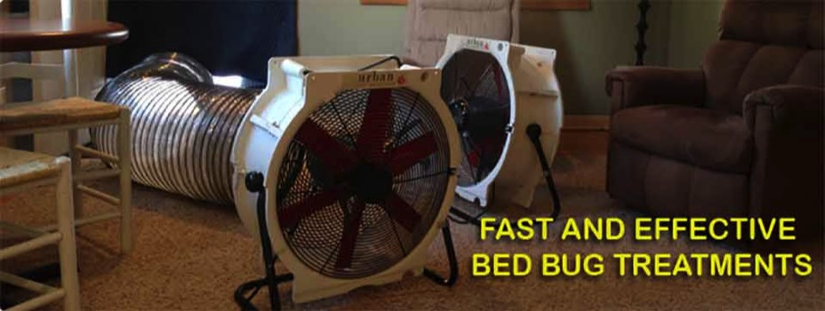 bed bug heat, seattle bed bugs, heat treatment to kill bed bugs